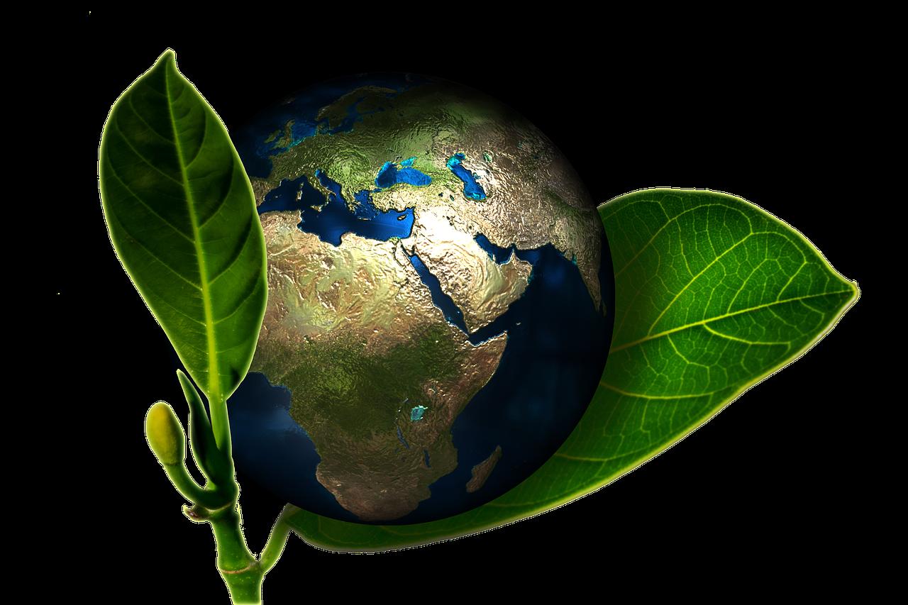kann man eine neue Erde pflanzen?