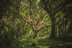 wunderschöner (Mutter-)Baum?