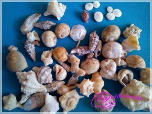 Fundstücke vom Strand